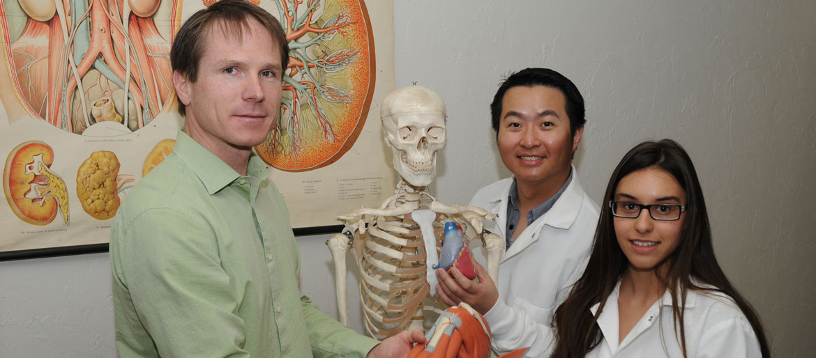 Professor with two students looking at human skeleton and organ models.