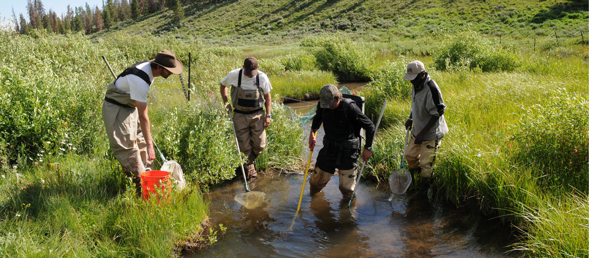 Faculty member and students collecting stream samples.