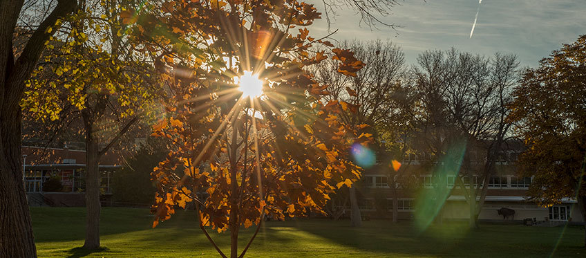 Sun rise through trees on the quad