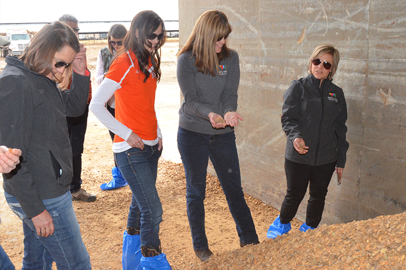ISU and Dairy West representatives sift through a pile of almond hulls, which is one of the feed sources for Eagle Ridge Dairy's cows
