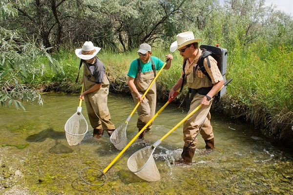 Three people doing Stream Ecology
