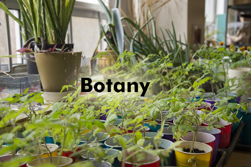 The Botany Collection