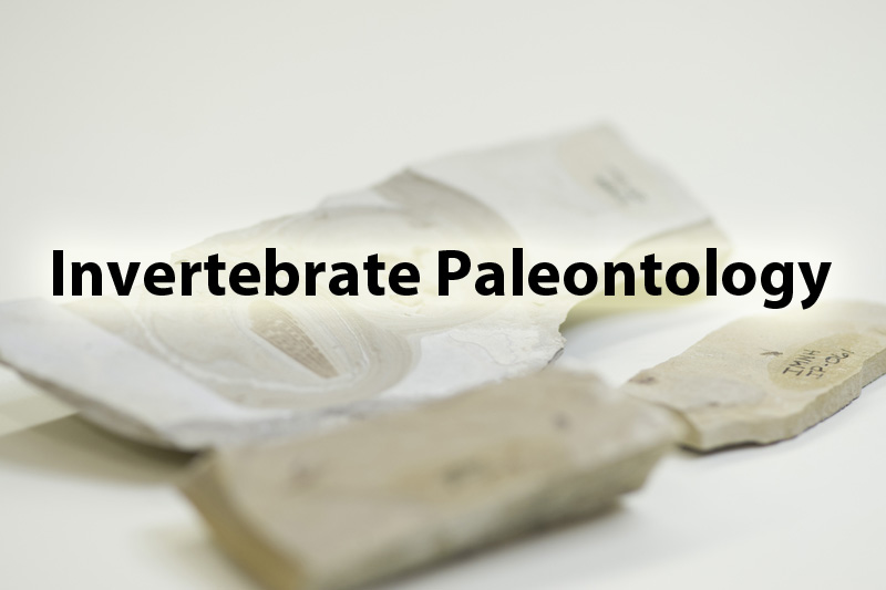 Invertebrate Paleontology