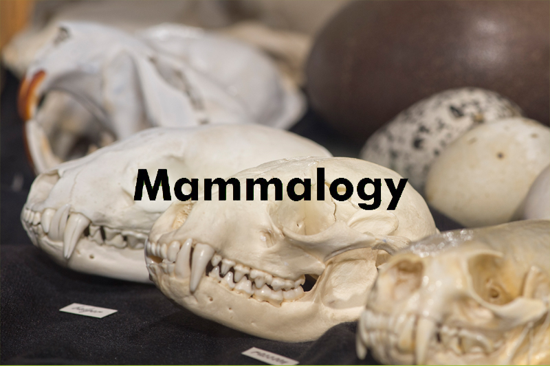 The Mammology Collection