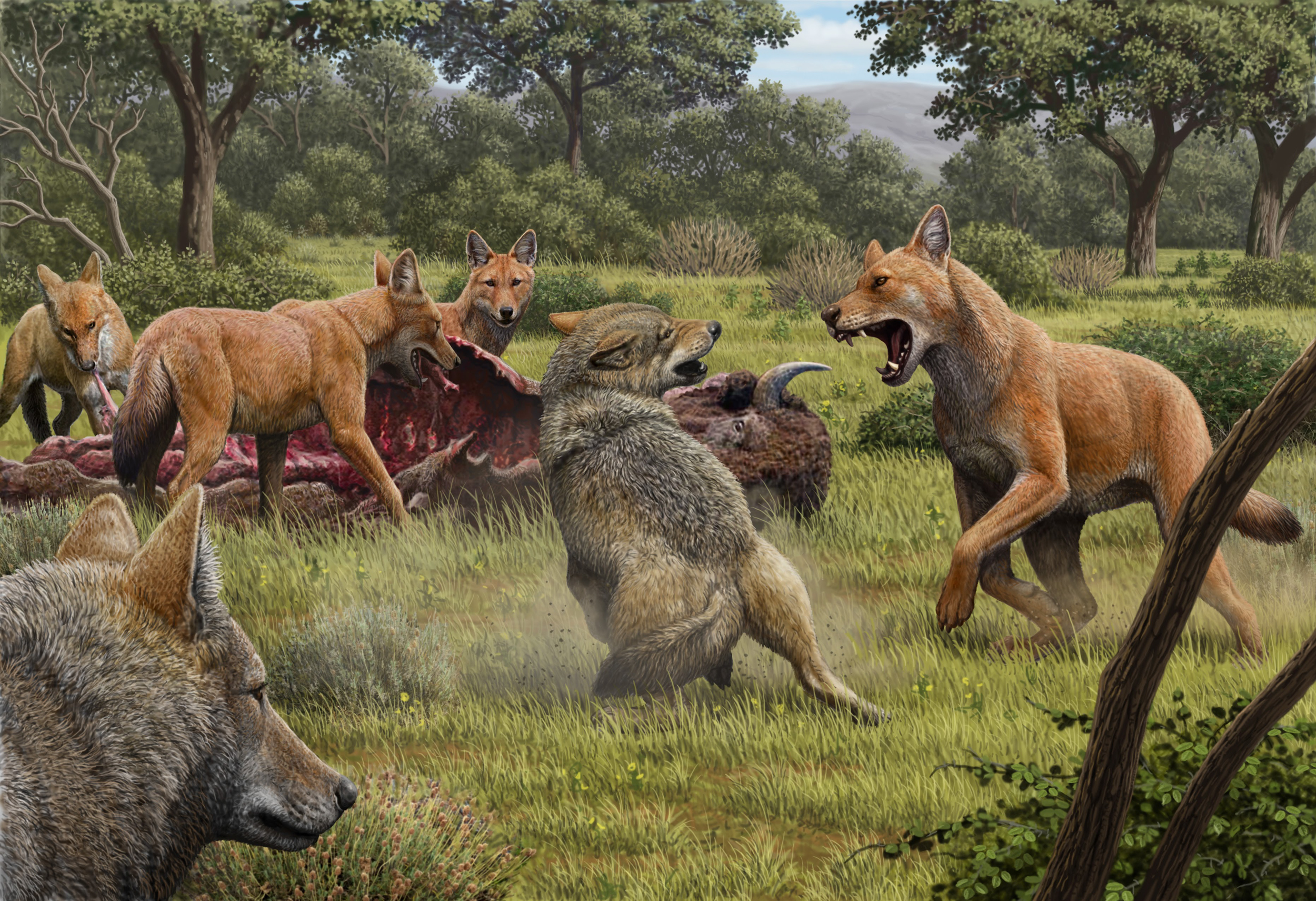 An artists depiction of what dire wolf hunting would have looked like