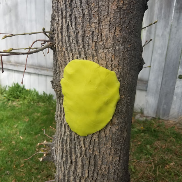 Play dough tree imprint example
