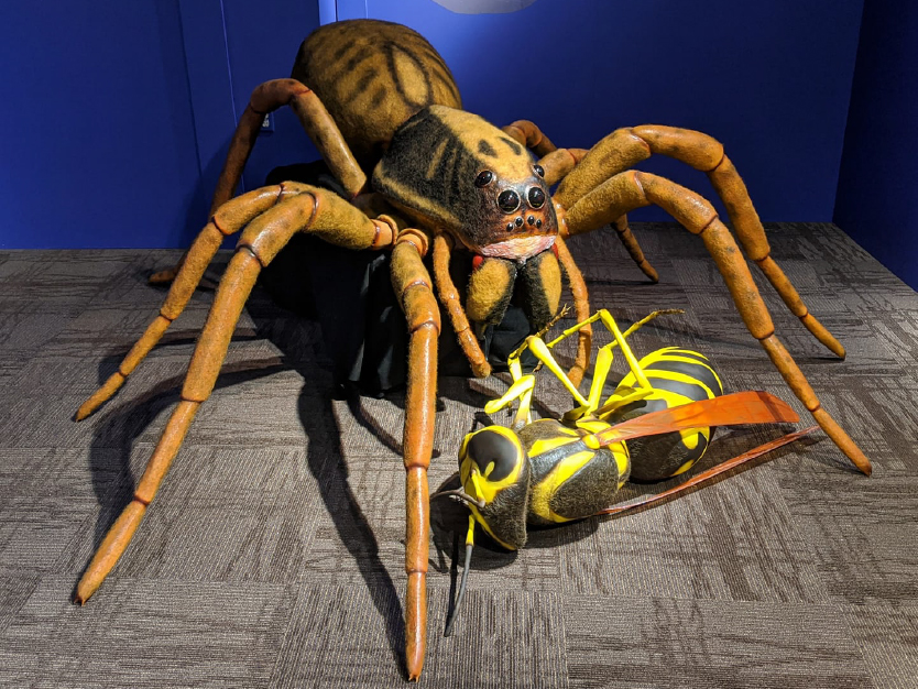 Wolf Spider and Wasp 3D prints in In the Shadows exhibition