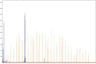 Microsatellite profile by 3130 genetic analyzer