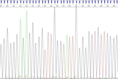 Basecalls during DNA sequencing