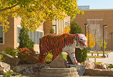 A picture of the Idaho State University Bengal