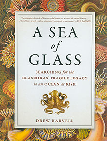 Sea of glass book cover
