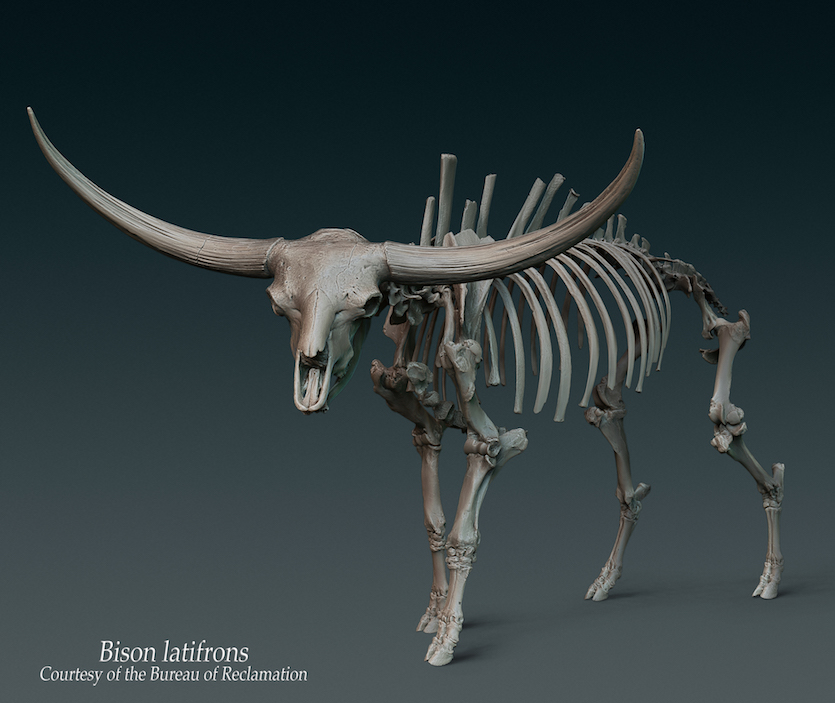 Idaho ancient bison fossils now available in 3-D thanks to Bureau of Reclamation, Idaho Museum of Natural History