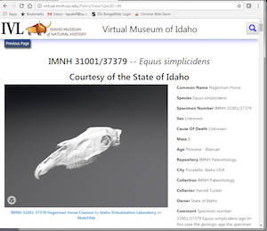 Screen shot of Idaho Virtual Museum web page showing an animal skull.