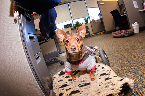 Dog in office